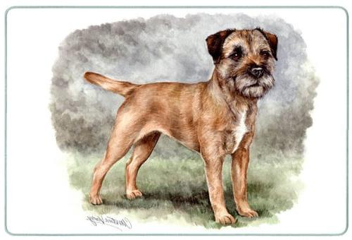 border terrier tempered glass cutting
