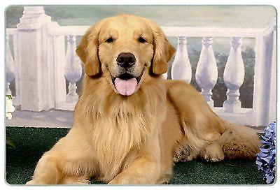 golden retriever on porch tempered glass cutting